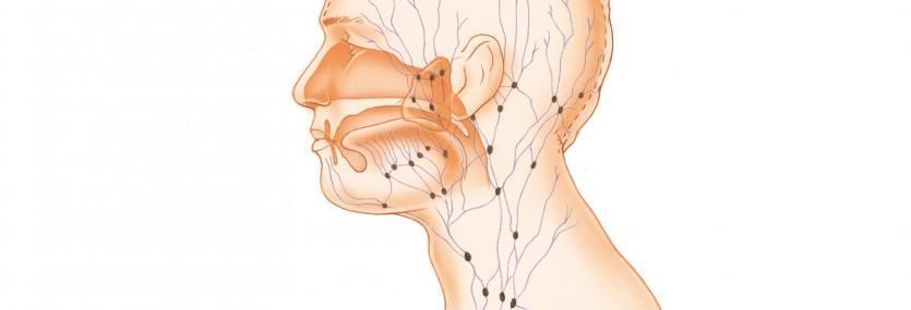 Hoofd hals lympeklieren