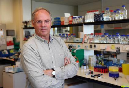 De optimale behandeling vinden op gekweekte tumorcellen